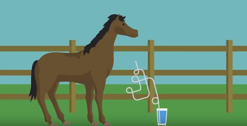 Två bra sätt för hästar att dricka mer vatten